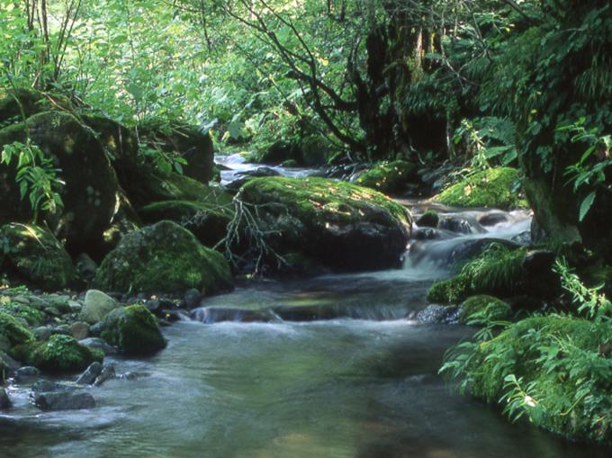 自然の川 | 流域の自然を考える...