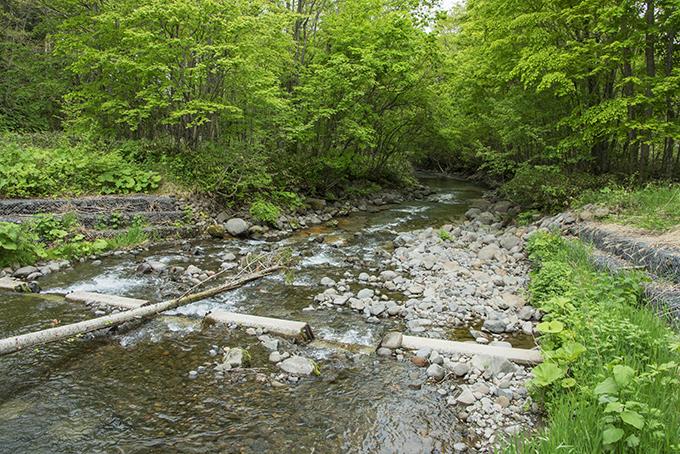 魚道の下の堰の下流では砂利が失われて、岩盤の露出が広がってしまった。