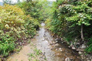 子熊の沢川はごくごく小さな川だ。国道227号線の橋の下流側。