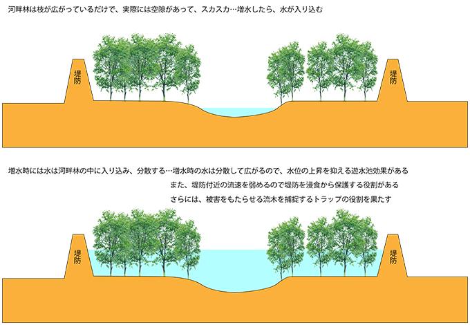 ①河畔林の役割-01・遊水池効果・浸食作用の低