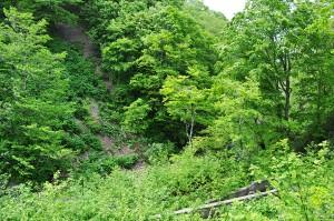 治山ダムの下流側では川底が下がるために、川に面した山の斜面が砂山崩しのようにずり落ちている。