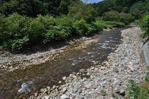 急勾配の渓流なのに川の石は小さく、増水したら流されるような石だ。川底は下がり、川岸は段差ができているのが分かる。これが河床低下の特徴で、上流にダムがある証拠だ。