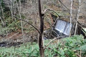 落差の大きな治山ダムが、サケやサクラマスの遡上を妨げている。そして、治山ダムから下流では砂利が流されるために、川底が下がり、各所で川岸が崩れているのが見られる。