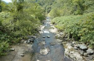 治山ダムの下流では川底の砂利が流される一方で、供給されることがないので、岩盤が露出してしまった。川の上流域になるこの場所ではサクラマスが遡上していたが産卵はできなくなった。