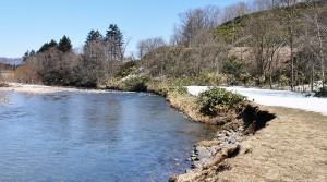 治山ダムのずっと下流部でも、川底の石が流されて川底が下がり続けている。そのため、川岸が崩れ、川に面した国道277号線の斜面がずり落ち始めた。