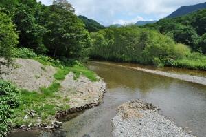 砂防ダムはすでに小砂利で満杯になり、草木が密生し、樹林化が広がっている。