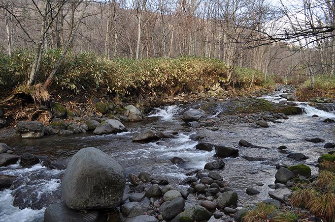 さらに上流へ行ったが、国有林のゲートがあった。川底が下がって、川岸が崩れて垂直の崖になっている。川岸が垂直な崖になった川には上流に必ずダムがある。