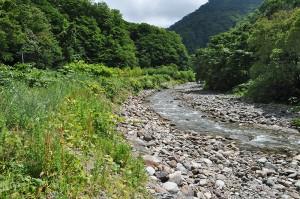 川岸に段差が出来て、崩れているのが分かる。川岸が崩れるから、次第に川幅が広がっていく。急流河川の石が、異常に小さいということは、上流にダムがあり、このダムによって流下する石の大きさが選り分けられていることを示している。