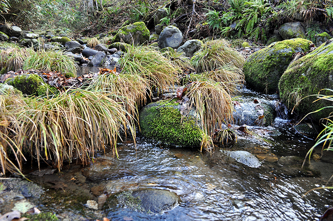 支流の小さな川では苔むした石が見られる。群別川もかつてはこうした苔むした川だったようだ。