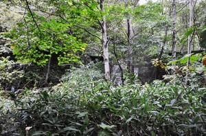 2号砂防ダム。ダムには砂利が満杯に堆積し、堆砂域は鬱蒼とした樹林で覆われていた。