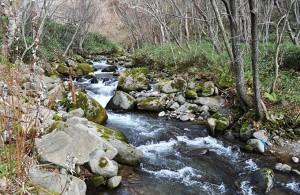 千代志別川は急流河川だが、巨石が互いに噛み合って、急流河川でありながら安定した川となっている。上流にはたくさんの治山ダムが建設されてしまったので、今後、巨石が動き、大規模な災害が発生することを懸念する。2011年11月6日
