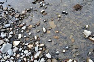 川底の砂利。微細砂やシルト(泥)がかなり沈殿している。これでは川底に産み落とされた魚の卵は育たない。