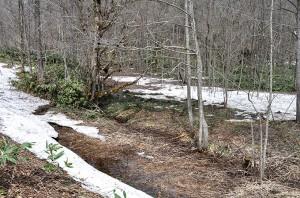 樹林化した治山ダムの堆砂域。