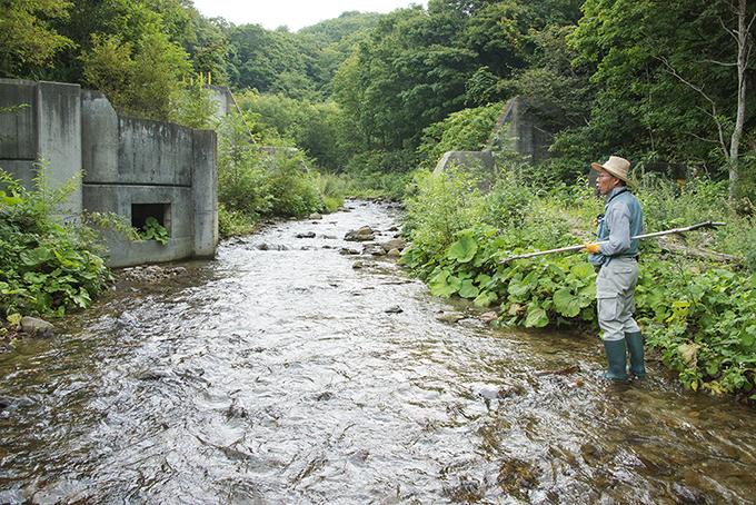 同、スリット化された治山ダムの前後がひとつながりの川に蘇っている。草木の回復も早く、自然な水辺が戻っている。魚道はまだ砂利の下に埋もれたまま。2014年9月10日