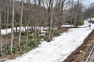樹林化した治山ダムの堆砂域は上流へと長く続いている。堆砂で勾配が小さくなった上に樹林化したので、治山ダムから微細な砂やシルトが選り分けて下流へと流れ出すことになる。自然河川では大小の多様な石が流れる。治山ダムは、自然の川の仕組みを根底から壊していることが分かる。