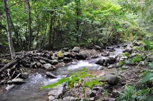 さらに上流をたどる。鬱蒼とした樹林に覆われた小さな川だ。安定している目安になる苔むした石があまり見当たらない。流れてきた石が積み重なり、砂が目立つ。こんな川を見たら上流にダムがあると思って間違いない。