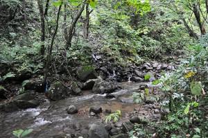 さらに上流へとたどると、川底が下がり気味で、苔の無い石が目立ち、砂が川底や川岸に大量に堆積していた。つまり、泥が流れている証拠であり、川底が下がって、川岸が崩壊したり、山の斜面のずり落ちたりしていることを示している。また、ダムが流れ込んだ土砂から微細砂やシルトを選り分けて流すことでも発生する。