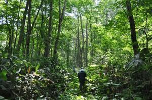 地図で、渡島森林管理署の治山ダムが上流にある事がわかった。ブヨの群れに襲われながら、ヒグマが徘徊する密林を上り、治山ダムを探した。2011年7月7日