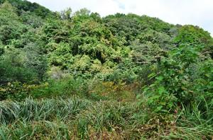 北海道大学の平川一臣氏は、川にダムをつくれば、つくったダムの数だけ、上流から下流の景観をした「新しい川を創出する」というが、まさにその通りである。生物多様性保全を無視する、川を分断するダムづくり事業は、科学者は加担すべきではない。