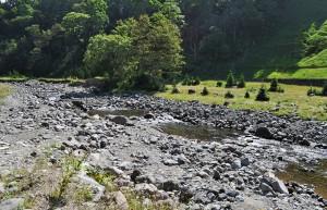 川底の石を寄せてせき止めて淵をつくっている。産卵場を創ったというよりもヒグマの餌場を創ったのだろうか…?