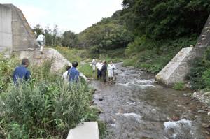 北海道南部のせたな町「良瑠石川」のスリット化された治山ダム。堤体はコンクリートで補強されていない。
