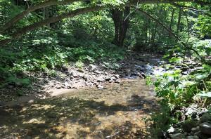 川の中央部が下がっており、左右両岸から石が中央にズリ出してきている。苔むした石が少なくなっている。
