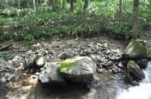 苔むした石が前のめりにズリ出し、川岸に段差が出来て、砂利が抜け出している。川底が下がった時の特徴だ。