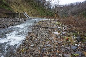 上流から治山ダムを見る。急流河川なのに、治山ダムのところで、勾配が小さくなり、流速が小さくなるので、小石や微細な砂・シルトなどが堆積したり、増水時には大きな石は上流へと貯まり続け、小石や微細な砂・シルトが選り分けられて下流へと流れ出す。治山ダムは川を流れ下る砂利をふるい分けるようになる。