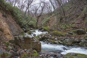 さらに上流へと上ってみると、苔むした石がたくさんあることが分かった。苔むした石があるということは、川が安定している証拠である。増水時には自然の摂理として浸食作用があるため、川に面した山の斜面がずり落ちているが、たいした規模では無い。一番上の治山ダムから下流までの間には苔むした石が見当たらない。治山ダムの建設で川を掘削したりしたこと、また、治山ダムが砂利を止めるため、その影響で川底の石が動いていると考えて良いだろう。治山ダムが建設される前は多くの苔むした石があったことだろう。