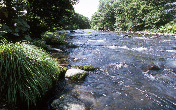 遊楽部川に苔むした石がたくさんあった清流のころ。