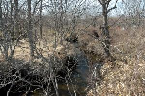 2003-04-18・加工済・別寒辺牛川+別寒辺牛川水系トライベツ川 023