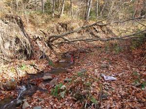 2005-11-09・加工済・ポンオサツ川・DSC05383