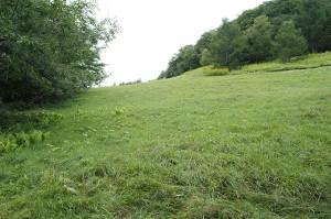 上流は開墾され、広い牧草地になっている。牧草地から水が流れ出すようになった。