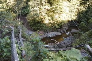 山の斜面がズリ落ちて、土砂で林道が埋まっていた。この先は徒歩で、さらに上流へ行ってみた。深い渓谷となっている。