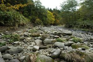 さらに上流で、河原に出てみた。巨石がごろごろしているが、量が少ない。また、苔むした石もあるがもっと多かった。