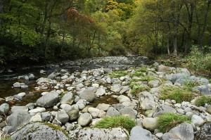 同じ場所から下流側を見た。奥の方の山の斜面が崩れ落ちていた。下部が浸食されて斜面がズリ落ちたと思われる。また、苔むした石は少ない。