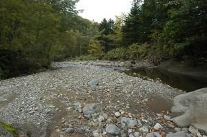 砂利が堆積しているところから、下流を見たところ。石は小ぶりであり、微細な砂が目立つ。