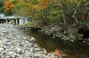 右側の川岸は川底が下がったので、川岸の石がズリ出すように落ちている。木の根っこもむき出しになっているので、木は倒れ、川岸の崩れもさらに拡大することになる。