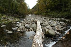 治山ダムの下流側。巨石が非常に少ないし、苔むした石も少ないことが分かる。
