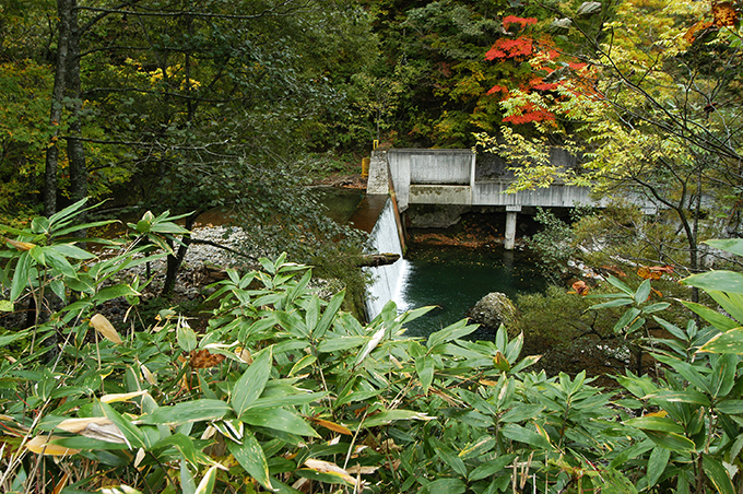 深いブナの森に包まれた川である。たった一つの治山ダムが下流全域に及ぼす影響を考えることが必要なのだが…どこからも疑問の声が上がらない。