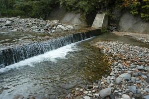 治山ダムの下流では石の大きさが小ぶりのものが目立つ。