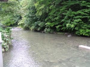 取水堰を越えた魚の姿が見られた。
