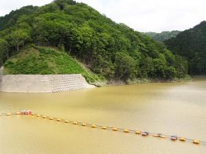 ダムに泥水が流れ込むと、泥水はなかなか消えない。この水が下流へと流されていく。また、ダムには泥水から微細な砂やシルトが沈澱していく。