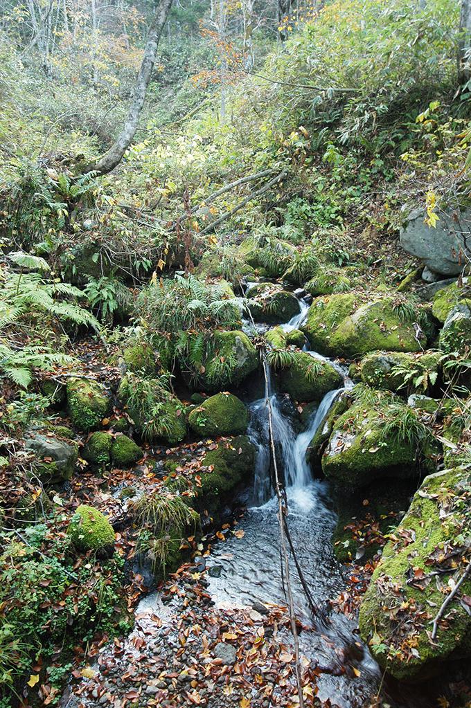小さな支流は急峻だが、石は挟まり合い、噛み合って動かない。安定しているから石が苔むしているわけだ。川の安定度を石にある苔で判定することもできるだろう。