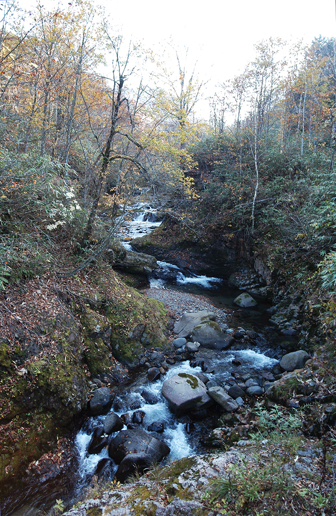 岩の上を水が流れ、ところどころで淵をつくり、美しい渓谷となっている。ヒグマも多い。
