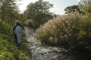 このあたりではサケも産卵している。川の下流だからわき水も豊富に違いない。
