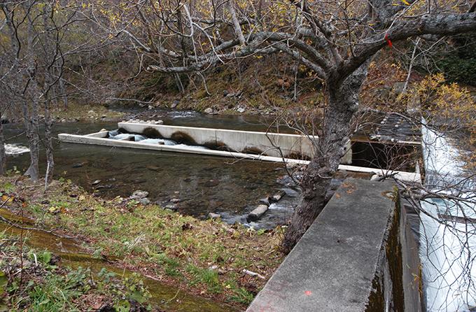 引き込み型の魚道が取り付けられている。この姿をスリット化されたダムという人もいるが、スリット化はされていない。なぜなら、魚道の上流側の高さとダムの堤体の高さはほぼ同じなので、へこみを入れた形のダムと考えればよい。だから、このダムの下流では川底が下がる。
