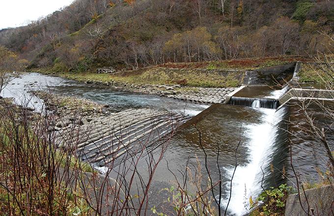 同じダムだが、コンクリートブロックが敷き詰められていないところは川底がどんどん下がる。そのため、川岸との落差が開き、川岸が崩れることになる。