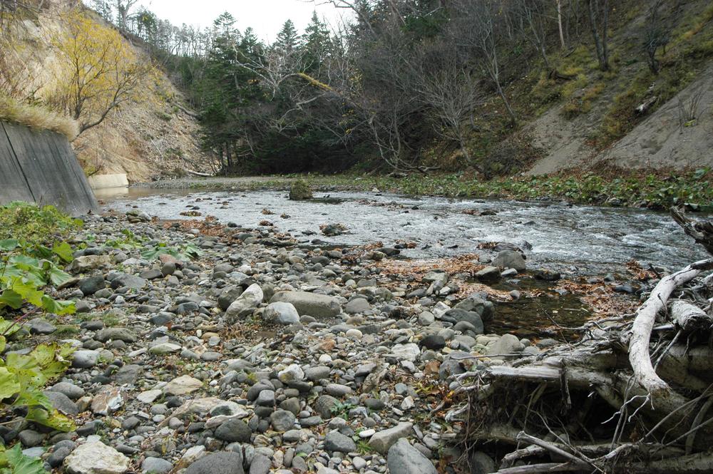 カラフトマスを見るための川岸は船着き場のようになっている。すぐ上流には低いダムがある。大きな石はあまりなく、小さな石ばかりである。また、石の量も少ない.