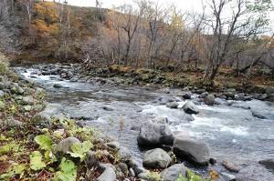 治山ダムの上流は、やはり川底が下がっている。きっと上流にさらなるダムがあるに違いない。川岸がなだらかではなく、崖状に段差ができているのが河床低下の特徴で、上流にダムがあることを示唆している。